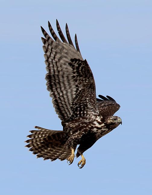 Utah Birders   Birding Blog, Utah Birds, Utah Birding ...